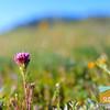 Wildflowering_012