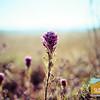Wildflowering_004