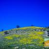 Wildflowering_016