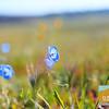 Wildflowering_007