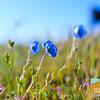 Wildflowering_014
