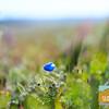 Wildflowering_006