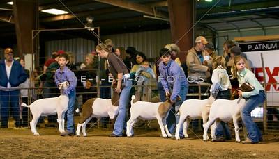 2008 Williamson County Livestock Show