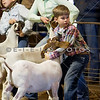2008 Williamson County Livestock Show