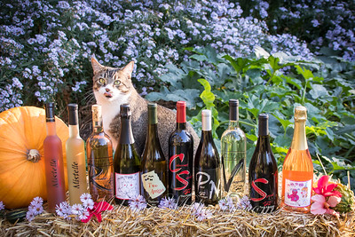 2020_10 28_TAW Bottles-1164_HRes