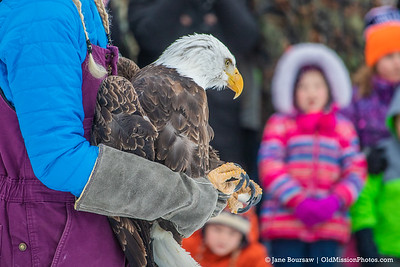 Wings of Wonder Eagle Release, 2-10-19