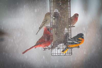 Winter Storm Grayson, Charleston, S.C.