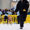 Record-Eagle/Keith King<br /> Alyssa Reardon, of Elk Rapids, runs ahead to motivate Sam, her English lab, as the Monster Dog Pull competition takes place Saturday, February 18, 2012 during the Cherry Capital Winter WowFest in Traverse City.