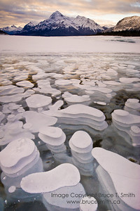 Surreal Ice Bubbles on Abraham Lake