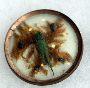 Cricket embedded in a button (for centuries).