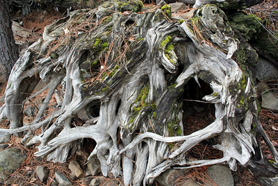 One of the walks we took we found this really neat looking root.