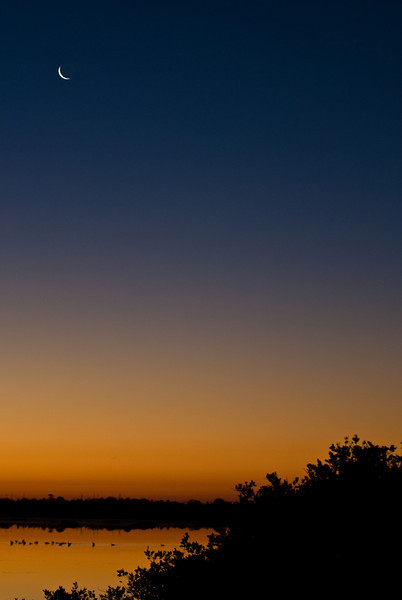 Photos From the Artie Morris Field-trip at The 2009 Space Coast Birding & Wildlife Festival - Sunrise with moon