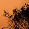 Photos From the Milton Hieberg Field-trip at The 2009 Space Coast Birding & Wildlife Festival - Sunrise silhouette