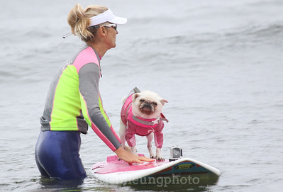 8/5/17: Gidget the Surf Pug waiting for the starting horn during the 2017 World Dog Surfing Championships at Pacifica State Beach in Pacifica, Ca by Chris M. Leung
