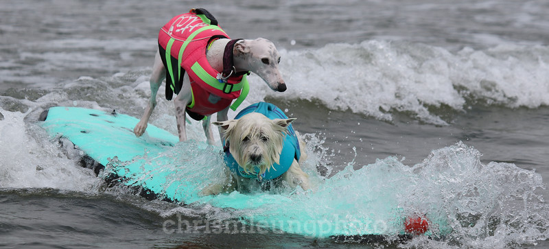 8/5/17: Beans and Tristan riding in together during the 2017 World Dog Surfing Championships at Pacifica State Beach in Pacifica, Ca by Chris M. Leung