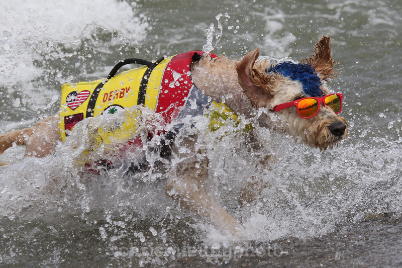 8/5/17: Derby at the 2017 World Dog Surfing Championships at Pacifica State Beach in Pacifica, Ca by Chris M. Leung