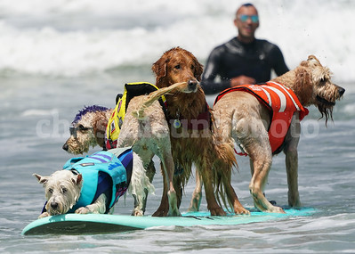 2018-08-04 World Dog Surfing Championship