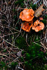 Colorful fungi.