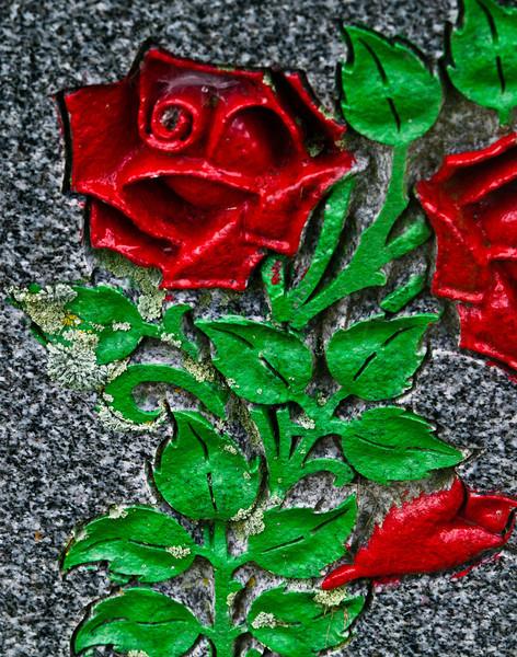 Lichen the rose.