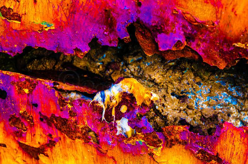 Voracious Rust