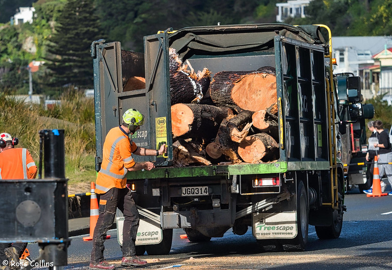 Recovery of Tree from Worser Bay House, 15 July 2017