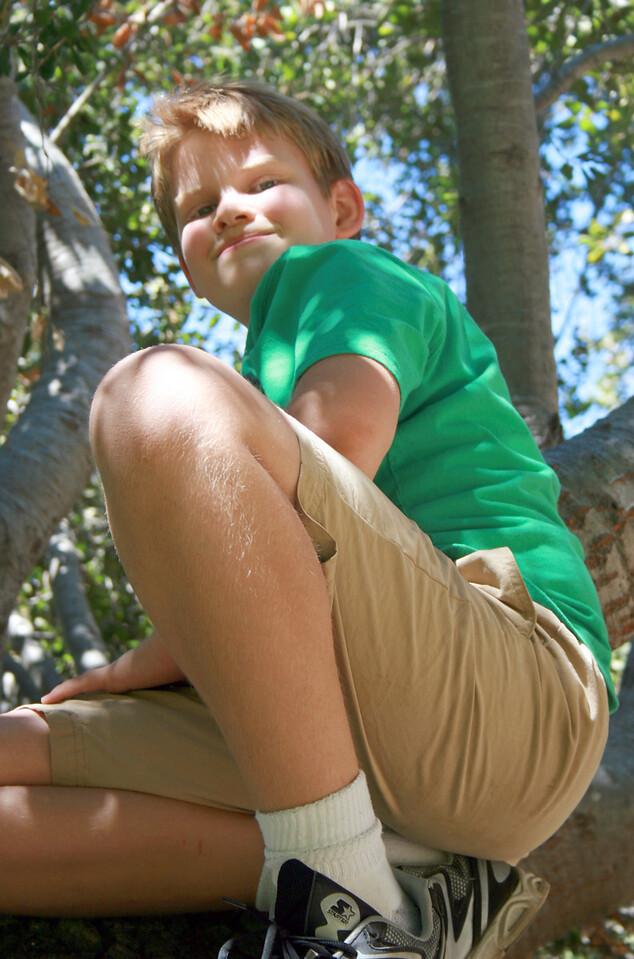 Devan in the oak tree 4