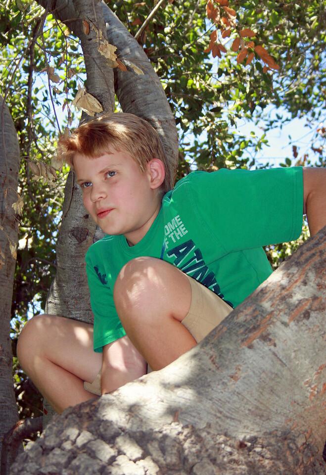 Devan in the oak tree 1