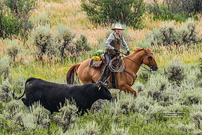 Wyoming Roundup-1