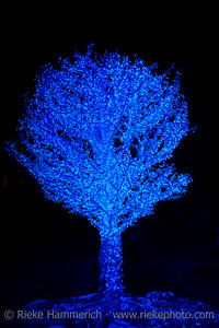 Blue Tree decorated with fairy lights for Christmas - Hong Kong at Night, China, Asia