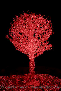 Red Illuminated Tree - Christmas in Hong Kong, Asia