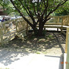 The ramp around the tree j- from the front door sidewalk