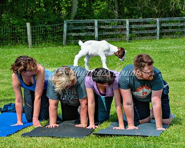 J_goat_yoga-3481 copy
