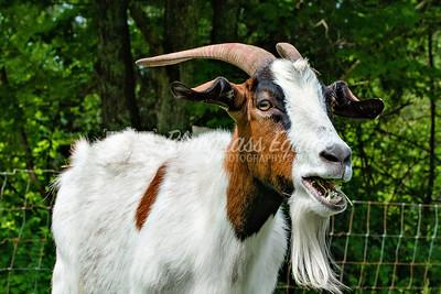 j_goat_yoga-3560