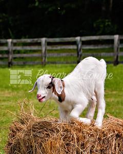 j_goat_yoga-3794
