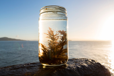 Seaweed Sample. National Geographic Your Shot San Francisco Photowalk (#yourshotmeetup) - San Francisco, CA, USA