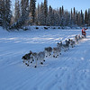 Credit: Susan Keltner/FCVB<br /> <br /> A musher and team of dogs on the Chena River during the 2008 Yukon Quest International Sled Dog Race.