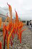 Dale Chihuly glassblowing exhibit<br /> New York Botanical Gardens