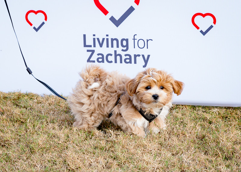 Living for Zachary Heartbeats Run 2017-228-7