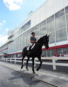 A rider returns to the stables after competing at the Balmoral Park HITS' Spring Spectacular Friday, June 16th, 2017, at Balmoral Park in Crete. (Gary Middendorf / Chicago Tribune)