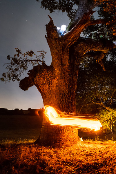 Fire Dance Tree