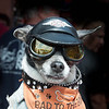 344 - Sturgis Biker Dog