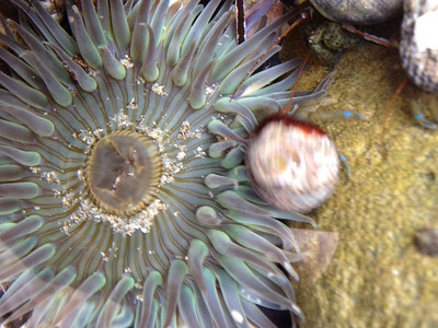 The tidepools of Laguna Beach