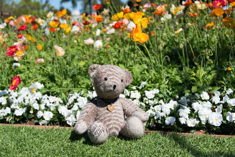 Teddy bear in the garden