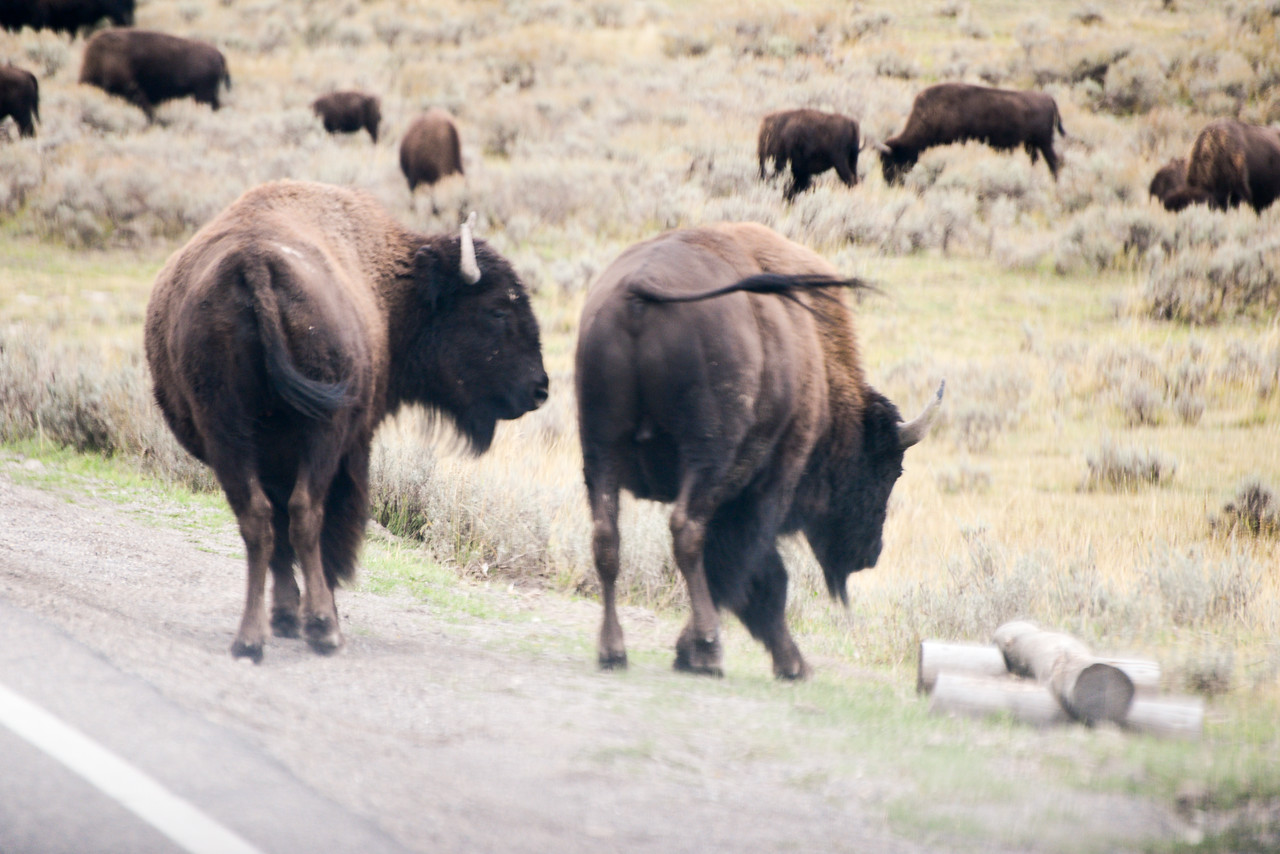 2013 09 07 18 30 Montana 11856