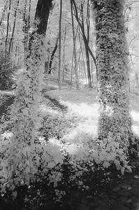 Parc de Saint-Cloud, France 2001