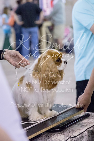 Sacramento Dog Show | Sacramento Event Photography | April 2014