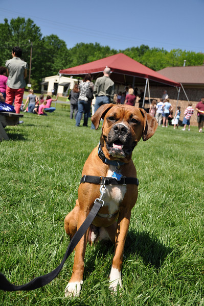 Even boxer Kenai from Hickory chilled in the sun!