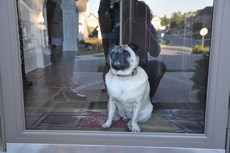 I love to greet the family...welcome to my home-come in!