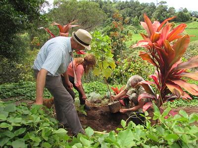 Planting a Kokia cookei.