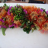 We had a hard time competing with the do-it-yourself lei from florist flowers, and demos by Pa'u riders. This lei is mostly non-native material - Protea & boufgainvillea